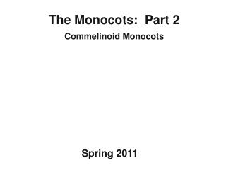 The Monocots:  Part 2 Commelinoid  Monocots