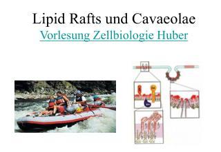 Lipid Rafts und Cavaeolae Vorlesung Zellbiologie Huber