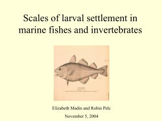 Scales of larval settlement in marine fishes and invertebrates