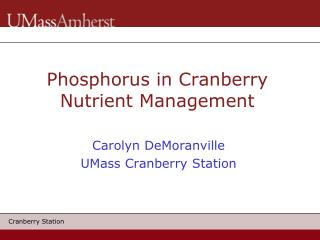 Phosphorus in Cranberry Nutrient Management