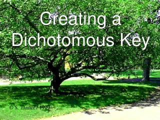 Creating a Dichotomous Key
