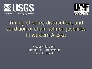 Timing of entry, distribution, and condition of chum salmon juveniles  in western Alaska