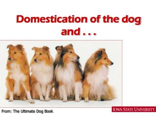 Domestication of the dog and . . .