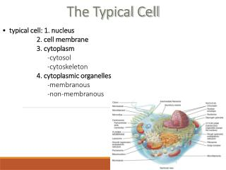 The Typical Cell