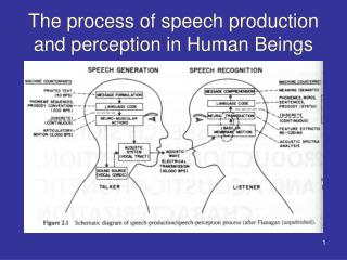 The process of speech production and perception in Human Beings