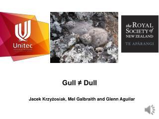Gull ≠ Dull
