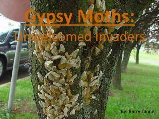 Gypsy Moths: Unwelcomed Invaders