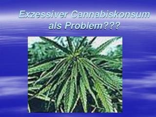 Exzessiver Cannabiskonsum als Problem???