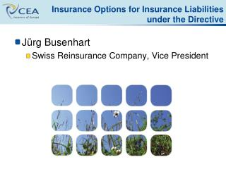 Insurance Options for Insurance Liabilities under the Directive