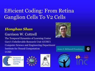E ? cient Coding: From Retina Ganglion Cells To V2 Cells