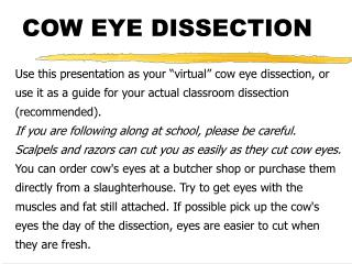 COW EYE DISSECTION