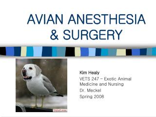 AVIAN ANESTHESIA & SURGERY