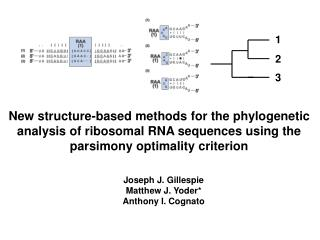 New structure-based methods for the phylogenetic analysis of ribosomal RNA sequences using the