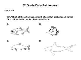 5 th  Grade Daily Reinforcers TEK 5.10A