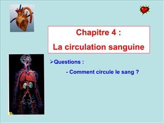 Chapitre 4 :  La circulation sanguine