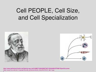 Cell PEOPLE, Cell Size,  and Cell Specialization
