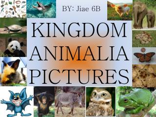 KINGDOM ANIMALIA PICTURES