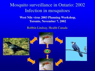 Mosquito surveillance in Ontario: 2002 Infection in mosquitoes