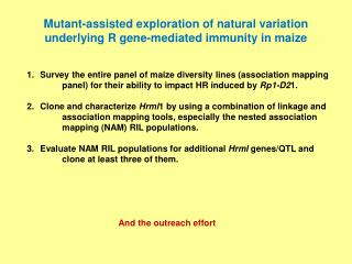 Mutant-assisted exploration of natural variation underlying R gene-mediated immunity in maize