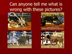 Can anyone tell me what is wrong with these pictures