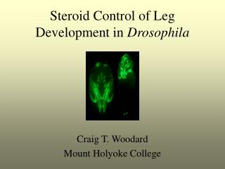 Steroid Control of Leg Development in  Drosophila