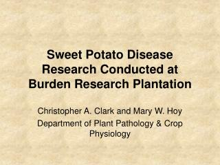 Sweet Potato Disease Research Conducted at Burden Research Plantation