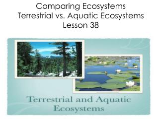 Comparing Ecosystems Terrestrial vs. Aquatic Ecosystems Lesson 38