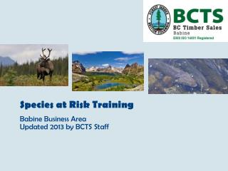 Species at Risk Training  Babine Business Area Updated 2013 by BCTS Staff