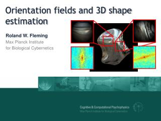 Orientation fields and 3D shape estimation