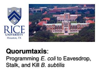 Quorumtaxis : Programming  E. coli  to Eavesdrop, Stalk, and Kill  B. subtilis