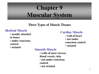 UNIT 8 The Muscular System Chapter 10