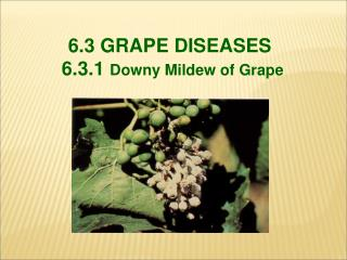6.3 GRAPE DISEASES  6.3.1  Downy Mildew of Grape