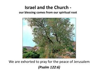 Israel and the Church -  our blessing comes from our spiritual root