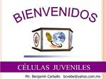 C LULAS  JUVENILES