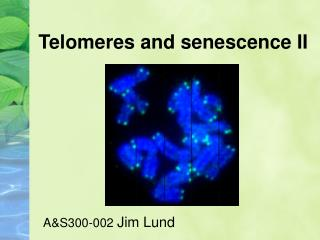 Telomeres and senescence II