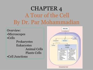 CHAPTER 4 A Tour of the Cell  By Dr. Par Mohammadian