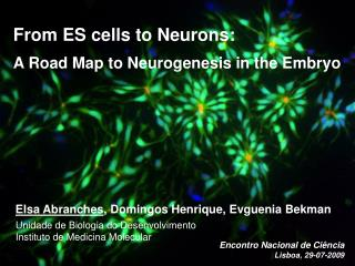From ES cells to Neurons:  A Road Map to Neurogenesis in the Embryo