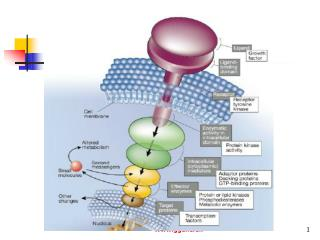 cellular signal transduction pathway