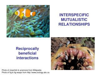 INTERSPECIFIC MUTUALISTIC RELATIONSHIPS