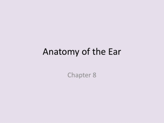 Middle Ear Tympanic Cavity