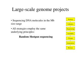 Large-scale genome projects