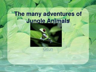 The many adventures of Jungle Animals