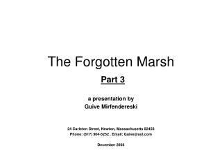 The Forgotten Marsh  Part 3