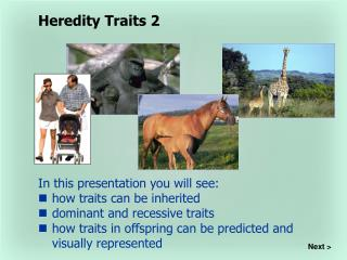 In this presentation you will see: how traits can be inherited dominant and recessive traits