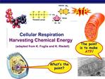 Cellular Respiration Harvesting Chemical Energy      adapted from K. Foglia and K. Riedell