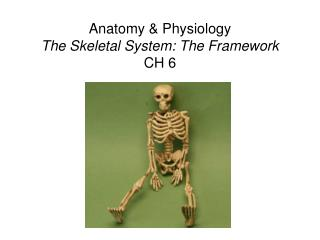 Anatomy & Physiology The Skeletal System: The Framework CH 6