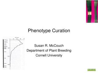 Phenotype Curation