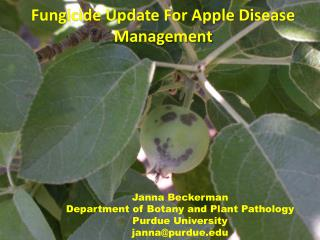 Fungicide Update For Apple Disease Management