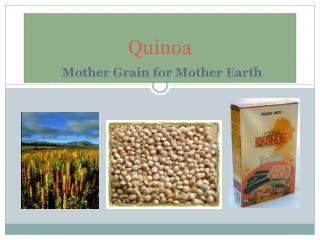 Quinoa Mother Grain for Mother Earth