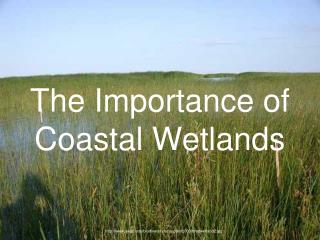 The Importance of Coastal Wetlands